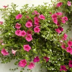 product-hanging-baskets-3