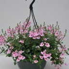 product-hanging-baskets-4