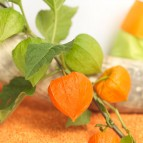 product-physalis-3